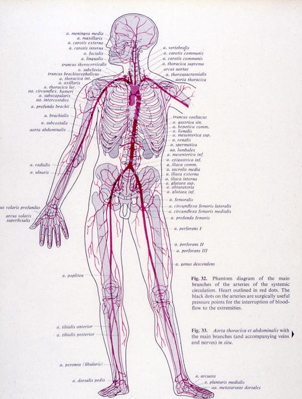 ontsteking van de bloedvaten